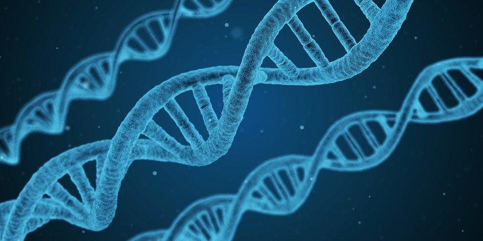 愛着障害と遺伝的要因