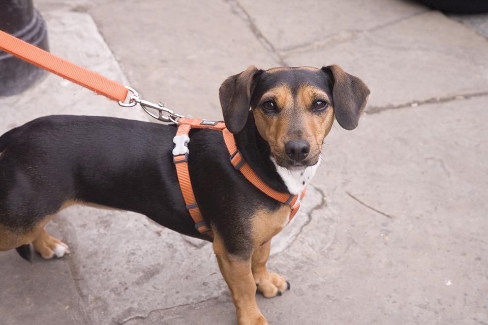 人間関係の糸と犬の首輪リードの緊張