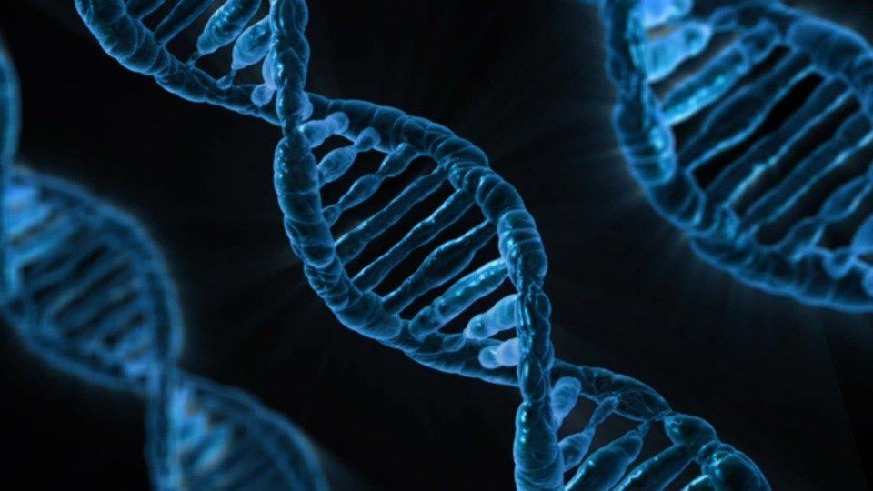 対人恐怖症、社交不安障害の不安遺伝子
